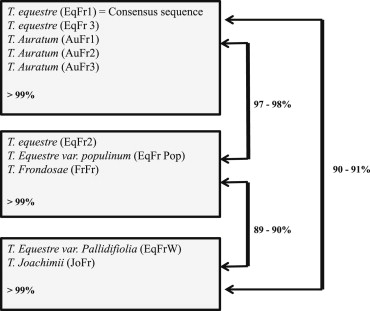 A molecular contribution to the assessment of the Tricholoma
