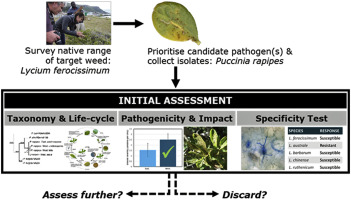Evaluation of the rust fungus Puccinia rapipes for