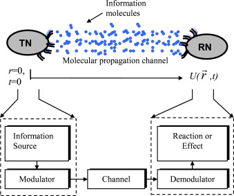 Nanonetworks simulation dating