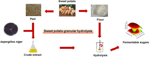 Enzymatic conversion of sweet potato granular starch into