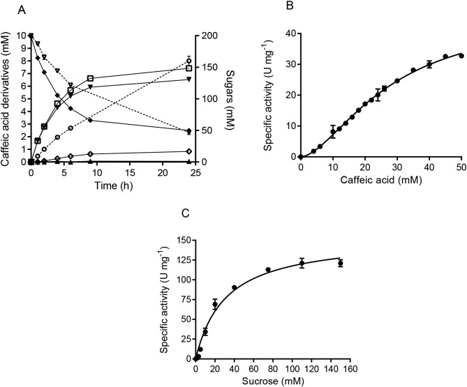 Glycosylation of caffeic acid and structural analogues