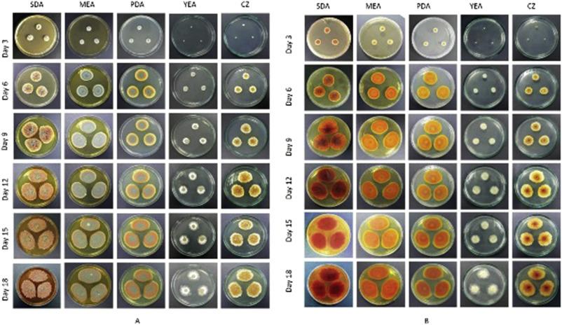 The orange-red pigment from Penicillium mallochii: Pigment
