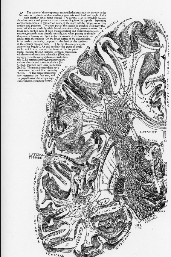 Topographic Classification of the Thalamus Surfaces Related to ...
