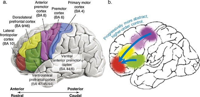Development Of Abstract Thinking During Childhood And Adolescence