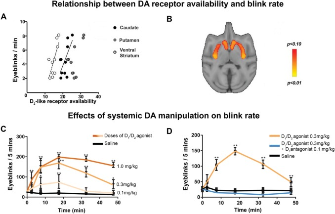 Eye Movements Reveal Temporal >> Beyond Eye Gaze What Else Can Eyetracking Reveal About Cognition