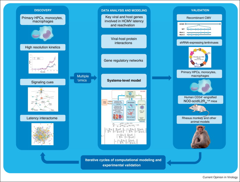 Functional genomics approaches to understand cytomegalovirus