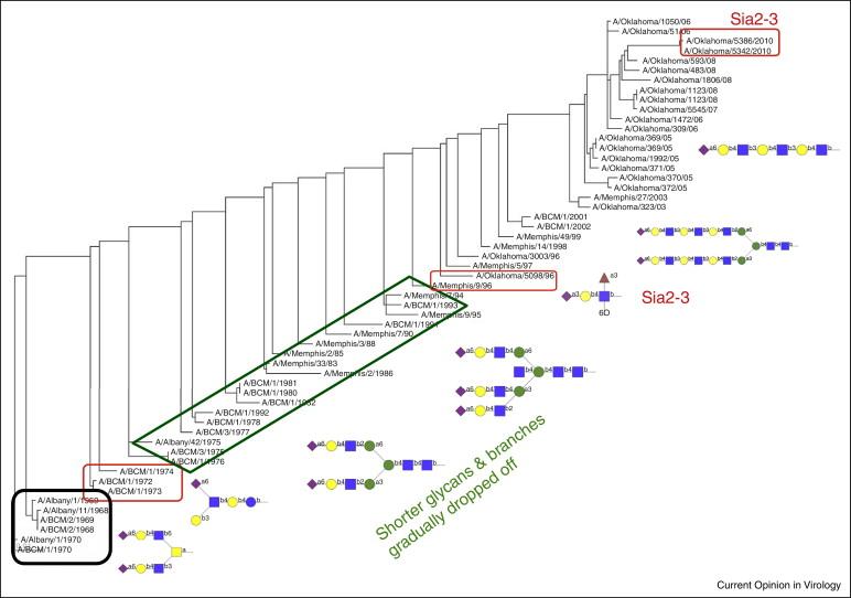 influenza virus glycan interactions sciencedirect rh sciencedirect com GMC Fuse Box Diagrams Ford Focus Fuse Box Diagram