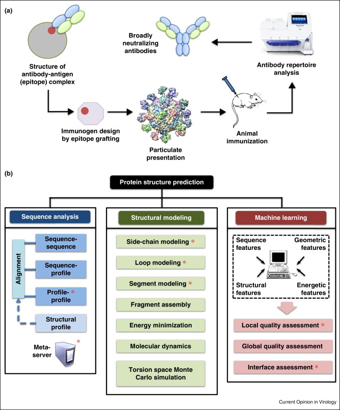 Computational tools for epitope vaccine design and evaluation