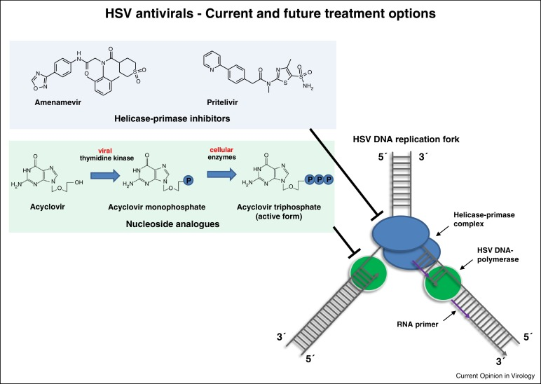 HSV antivirals – current and future treatment options