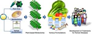 gyógyítsa a papillomavírus illóolajokat pusztítsd el a gyöngyöt