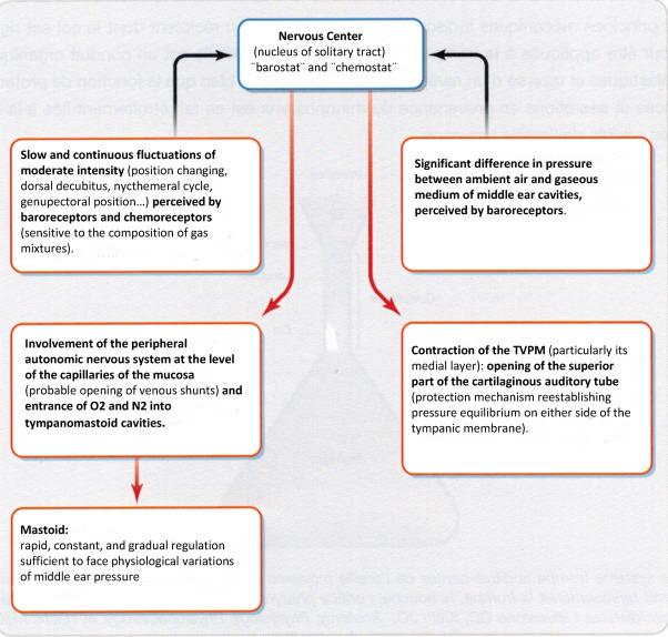 Tubotympanic system functioning - ScienceDirect