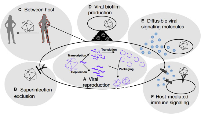 Sociovirology: Conflict, Cooperation, and Communication