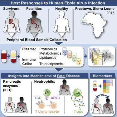 multi platform omics analysis of human ebola virus disease