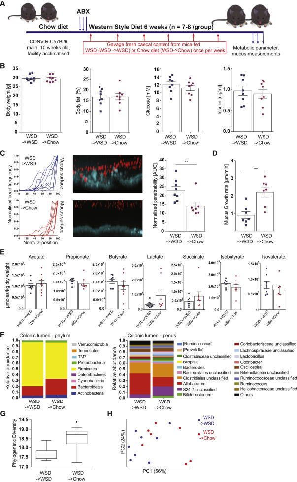 Bifidobacteria or Fiber Protects against Diet-Induced Microbiota
