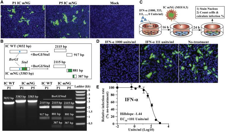 An Infectious Cdna Clone Of Sars Cov 2 Sciencedirect