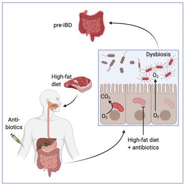 high-fat diet and irritational bower disease