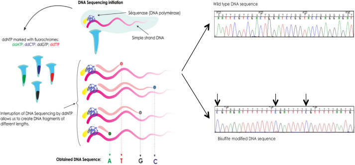 The impact of next-generation sequencing on the DNA