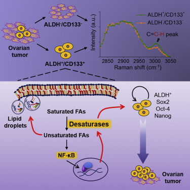 Lipid Desaturation Is a Metabolic Marker and Therapeutic