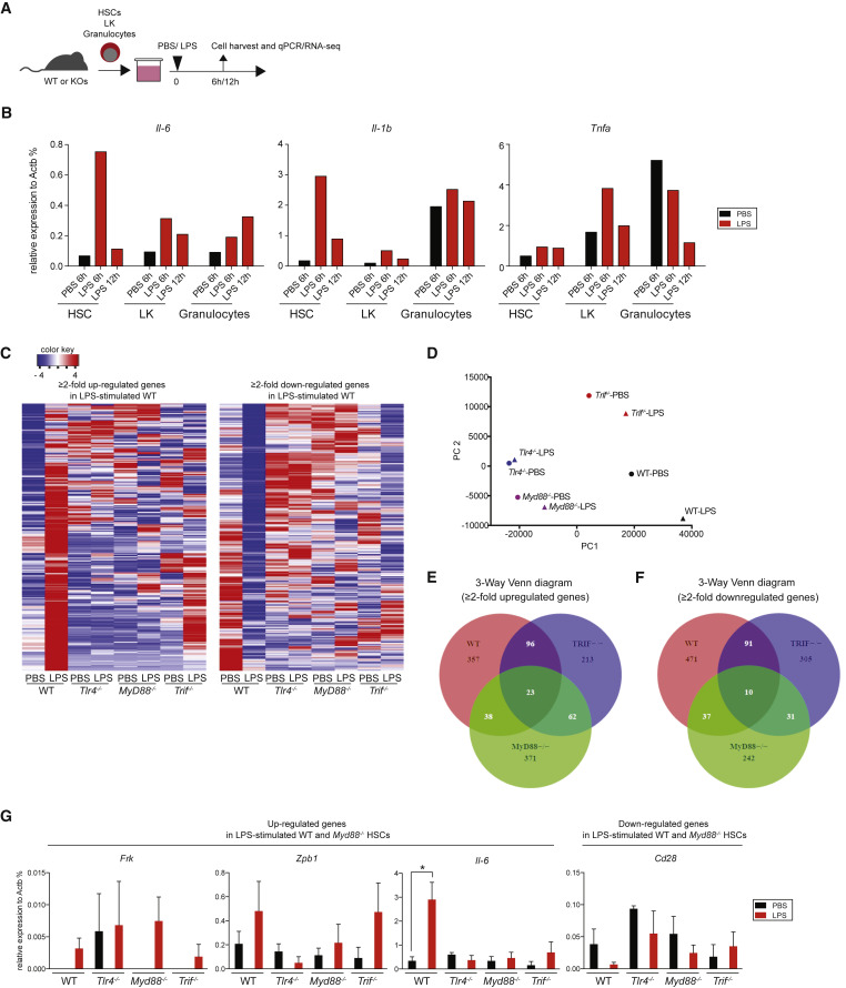 Pathogen Induced Tlr4 Trif Innate Immune Signaling In Hematopoietic