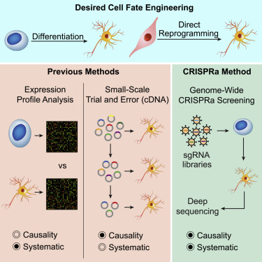 CRISPR Activation Screens Systematically Identify Factors