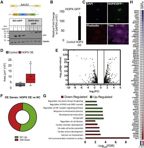 Single-Cell Transcriptomic Analysis of Cardiac