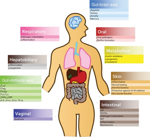 Engineering Human Microbiota: Influencing Cellular and