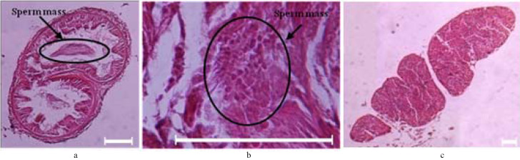 Morphological Characters And Histology Of Pheretima Darnleiensis