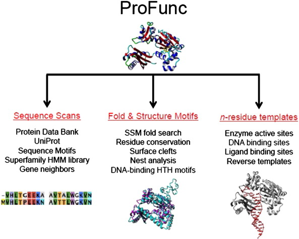 Biochemical Functional Predictions For Protein Structures Of