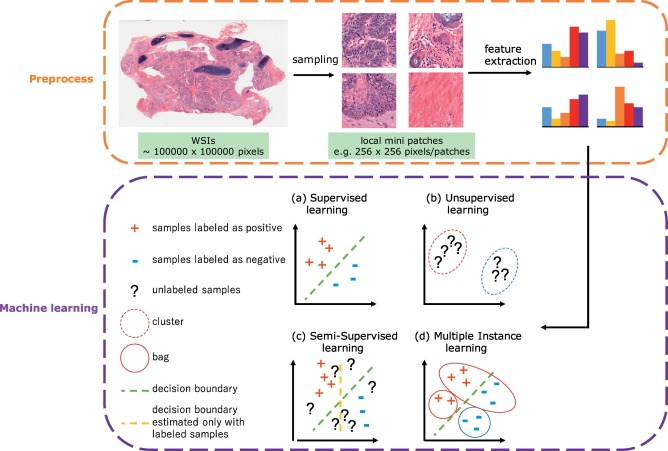 Machine Learning Methods For Histopathological Image Analysis