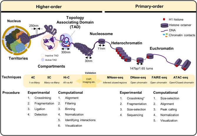 Computational Methods for Assessing Chromatin Hierarchy