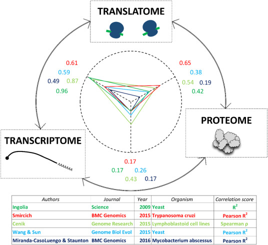 Following Ribosome Footprints to Understand Translation at a Genome Wide Level