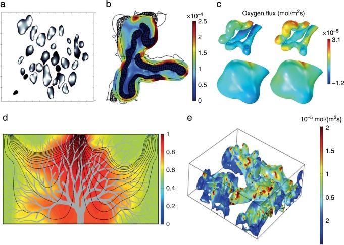 Advances in Human Placental Biomechanics