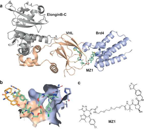 Bivalent Ligands for Protein Degradation in Drug Discovery