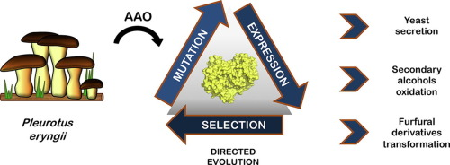 Directed Evolution Of The Aryl Alcohol Oxidase Beyond The Lab Bench Sciencedirect