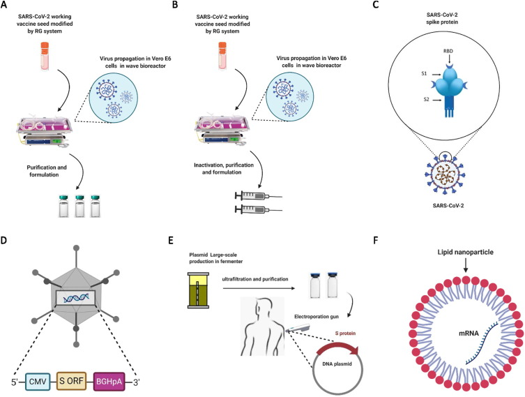 An overview of current COVID-19 vaccine platforms - ScienceDirect