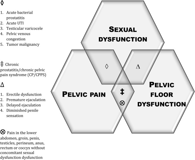 The Role of Pelvic Floor Muscles in
