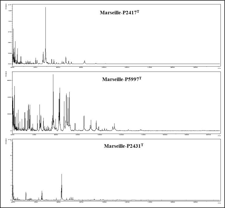 Remarkable Corynebacterium Pacaense Sp Nov Alistipes Megaguti Sp Pabps2019 Chair Design Images Pabps2019Com