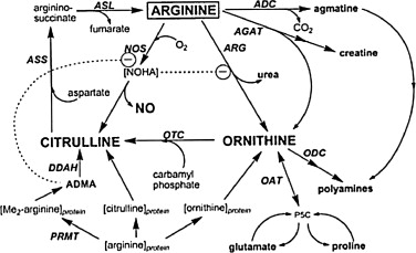 Anti-aging effects of l-arginine - ScienceDirect