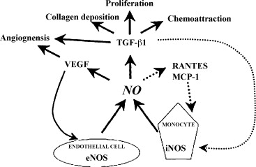 Anti-aging effects of l-arginine - ScienceDirect