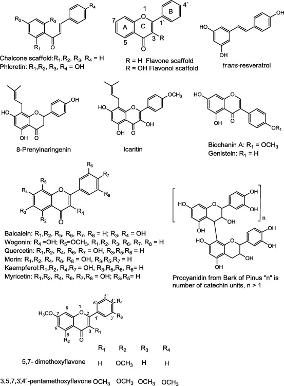 p-glycoprotein inhibitors of natural origin as potential tumor chemo