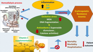 Oxidative Stress During Erythropoietin Hyporesponsiveness Anemia At End Stage Renal Disease Molecular And Biochemical Studies Sciencedirect