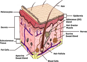 A Review On Polymeric Hydrogel Membranes For Wound Dressing