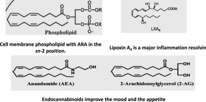 Arachidonic acid: Physiological roles and potential health
