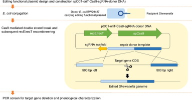 Reversal of carbapenem-resistance in Shewanella algae by