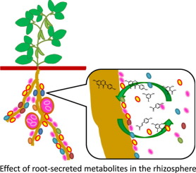 Molecular Microbial Ecology of the Rhizosphere: Volume 1 & 2