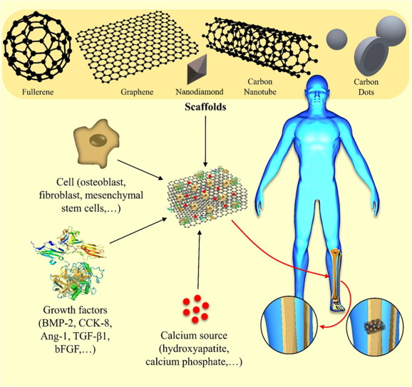 Carbon Based Nanomaterials For Tissue Engineering Of Bone Building New Bone On Small Black Scaffolds A Review Sciencedirect