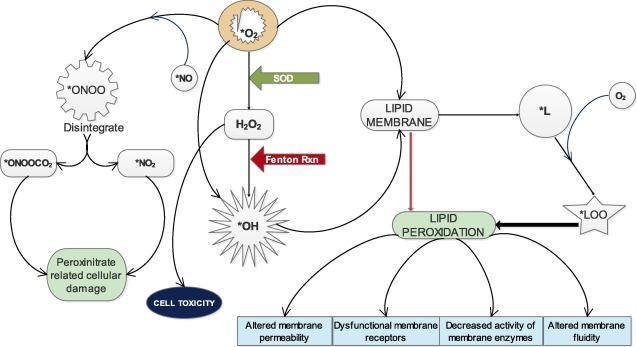 First line defence antioxidants-superoxide dismutase (SOD