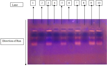 Effect Of Luminol And Bleaching Agent On The Serological And Dna
