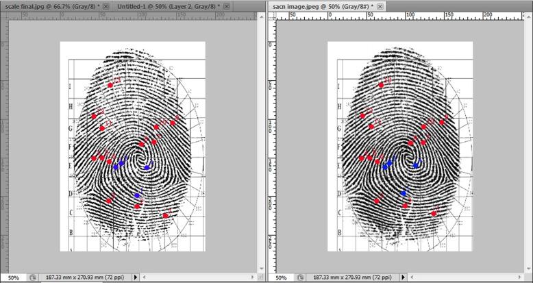 Digital grid method for fingerprint identification and objective