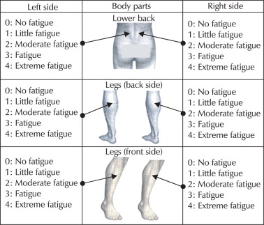 Assessment Of Muscle Fatigue Associated With Prolonged Standing In The Workplace Sciencedirect